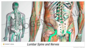 Lumbar Spine and Nerves